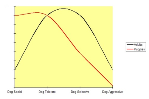 Normal dog sociability levels change as a dog matures.