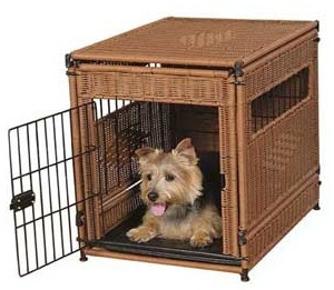 Yorkie in crate for toilet training