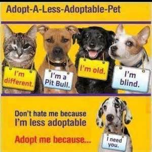 dog adoption