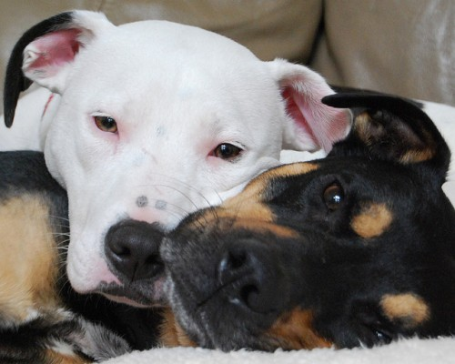 Who's dominant here? Neither dog!  Photo by Eileen McFall.