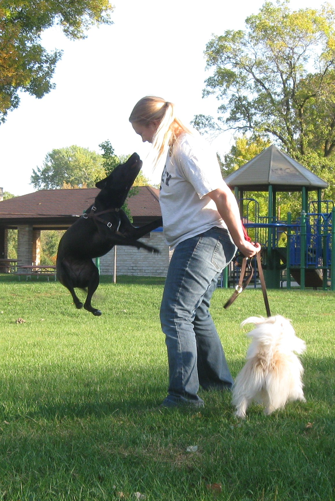 Canine freestyle: a selection of articles