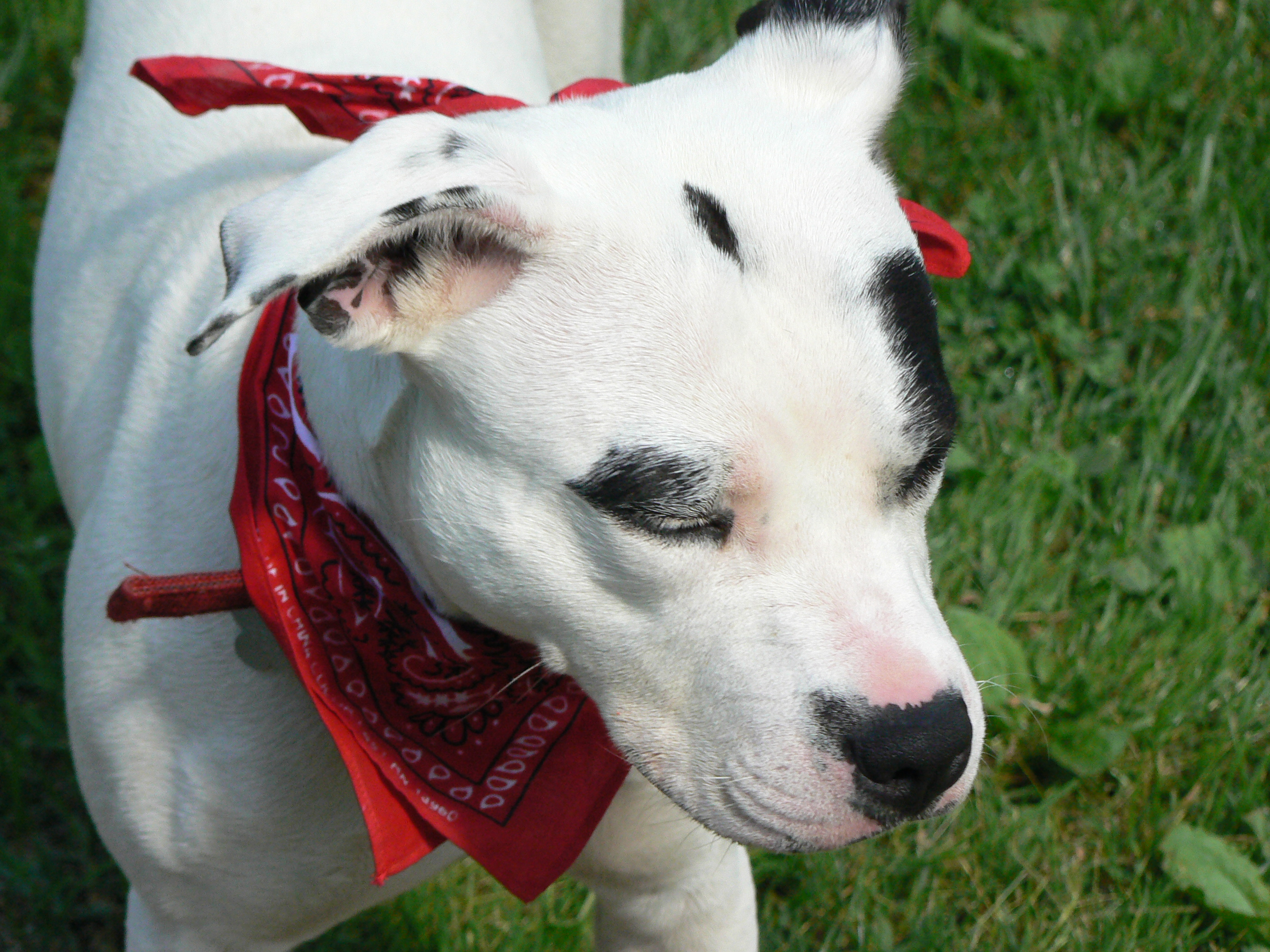 5 tips for traumatized dogs paws abilities 1225 upload 129 publicscrutiny Gallery