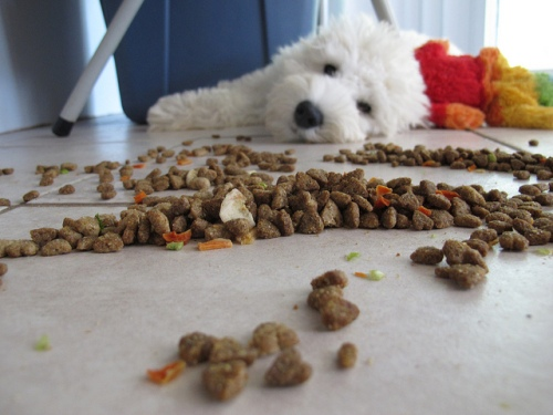 Spit-free kibble. Photo by BuzzFarmers on flickr.